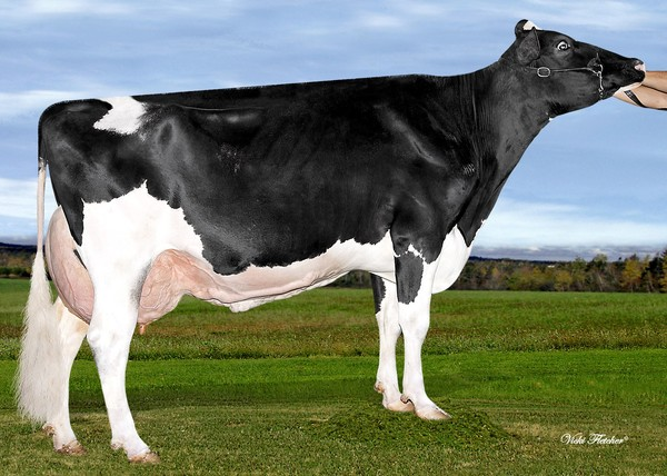 Amities Man O Man Lover Sexy VG-87