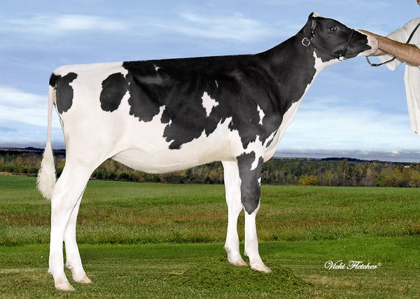 Amities Shottle Lotus VG 2Yr